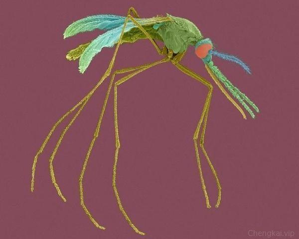 蚊子为啥光咬你不咬别人?