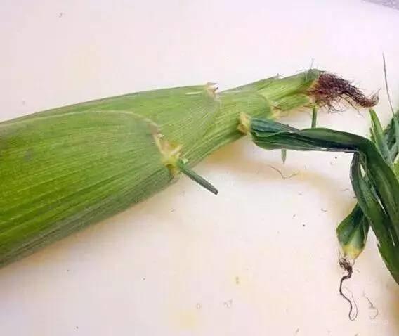 以前煮玉米都错了,这才是正确方法!